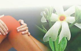 फूल, पत्ती, छाल, बीज सबके सब गुणकारी हैं हरसिंगार के